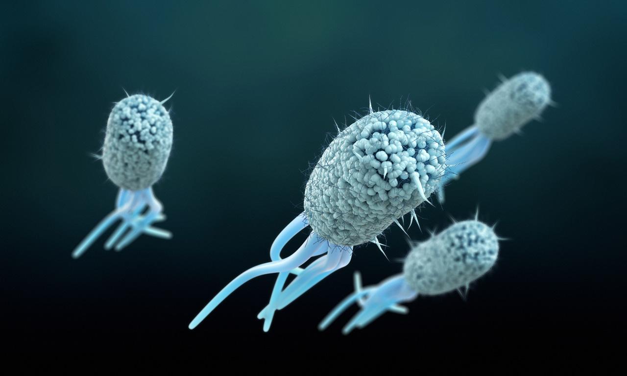 microscopic e.coli