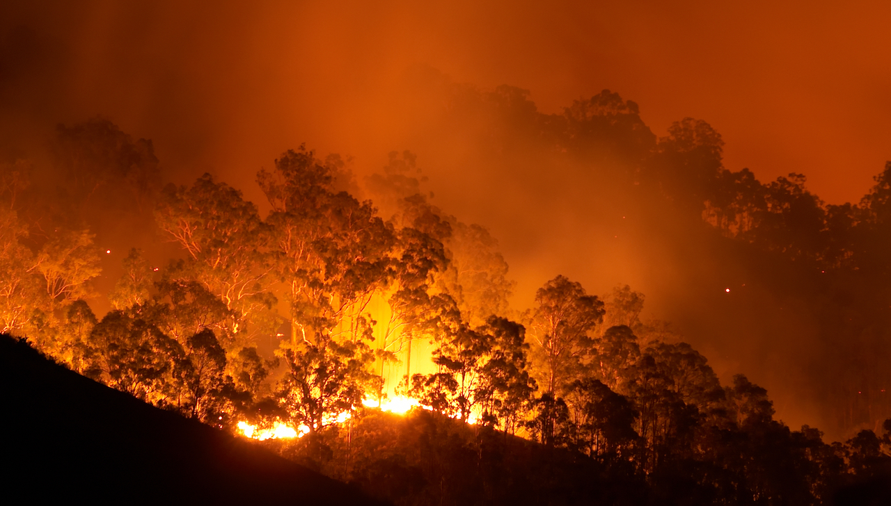 Bushfire at night